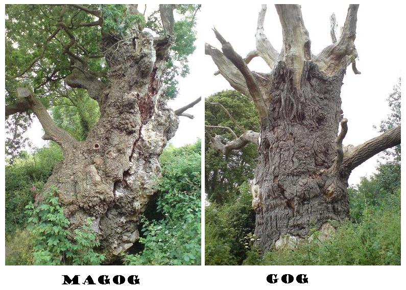 gogandmagogtrees
