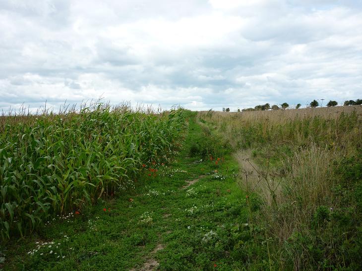 Knighton Hill - Ridgeway - August 2010 (17)