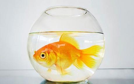 Small business fishball