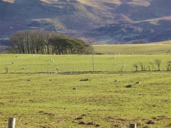Elva Plain stone circle - Cumbria - Imbolc 2013-02-02 071 (2) (Medium)