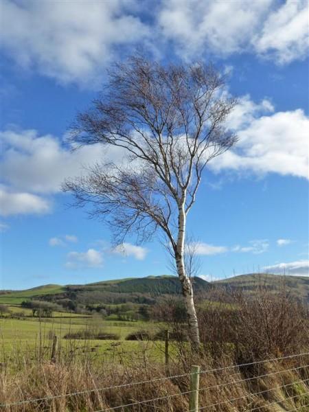 Beautiful day for a beautiful birch