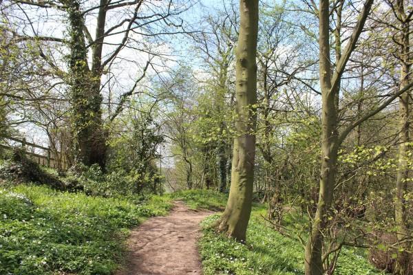 Hermit's Wood at Beltane