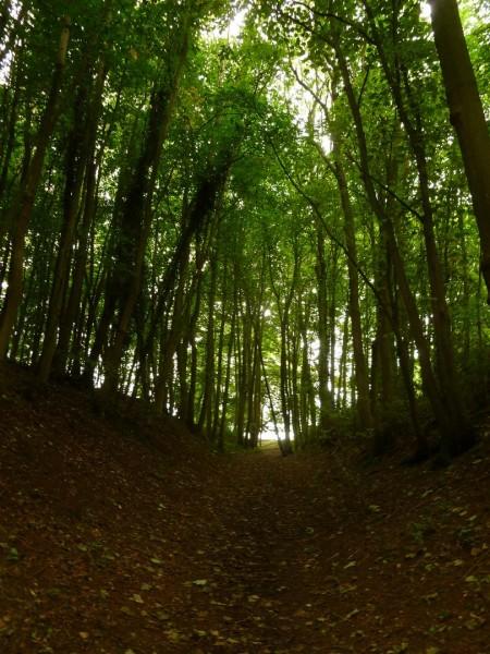 Belas Knap - Autumn Equinox 2013 (11)