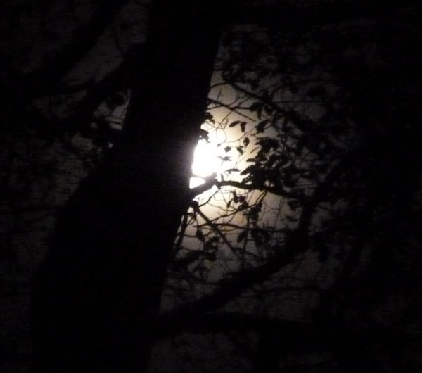 Hunters Moon at Alderley Edge