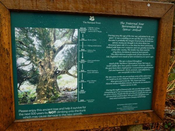 Borrowdale Yews - Spring Equinox 2014 (9) (Large)