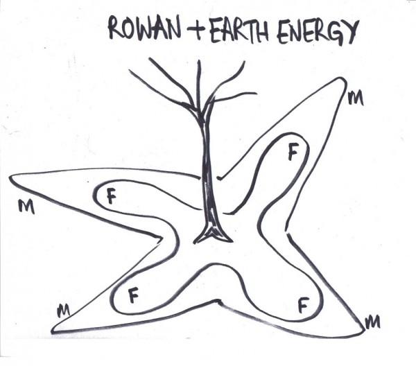 Shape of a rowan tree's unified earth energy