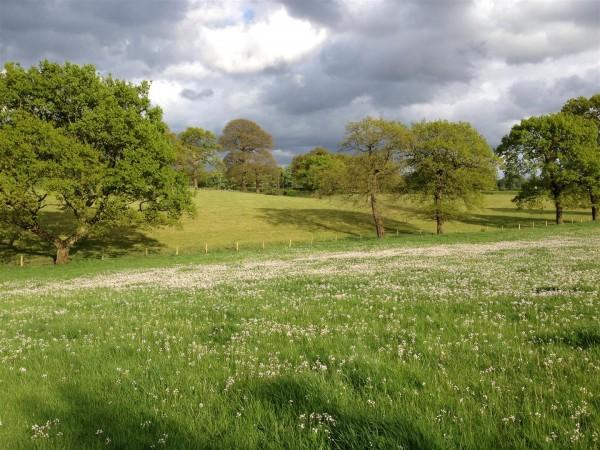 Golden Dragon - Alderley Edge - May 2014 (2) (Large)
