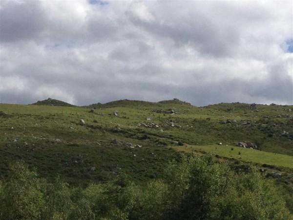 Dromagorteen stone circle - June 14 (3) (Medium)