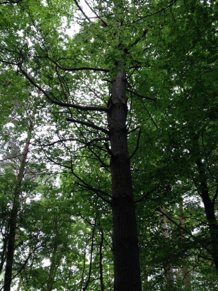 A dying pin in Alderley Edge