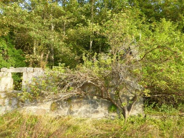 Autumn Equinox at Balmoral Forest (14) (Medium)