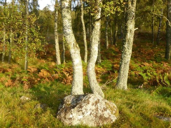 Autumn Equinox at Balmoral Forest (5) (Medium)