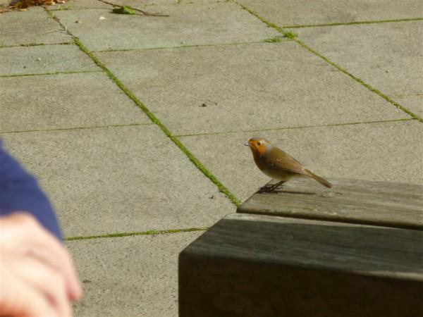 Robin at Loch Lomond (Medium)