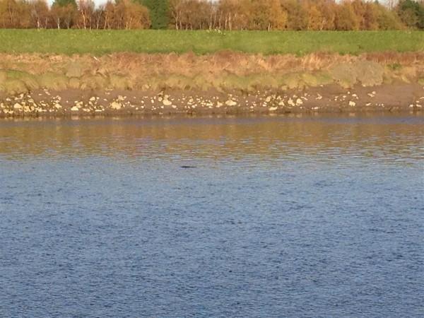 River Dee - Nov 14 (3) (Medium)