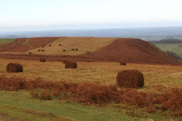 Patchwork bales at Mitchell's Fold