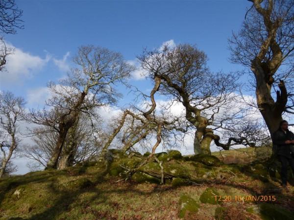 Cerrig Arthur dolmen - Jan 15 (27)