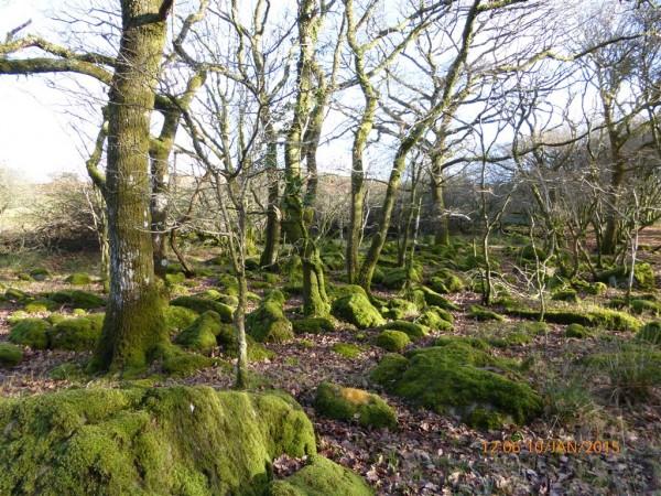 Cerrig Arthur dolmen - Jan 15 (36)
