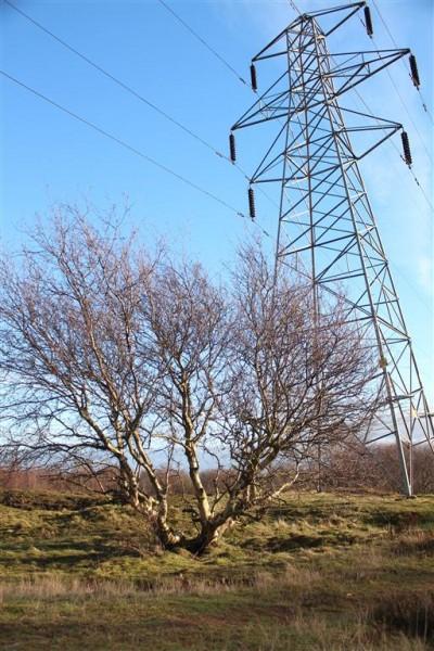 Runcorn Hill - Jan 15 (1)