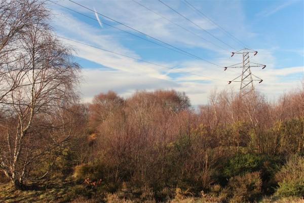 Runcorn Hill - Jan 15 (8)