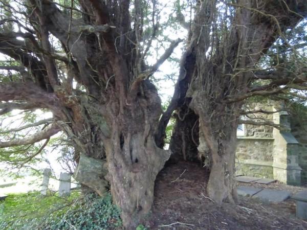 St Deiniol Church - Anglesey - Imbolc 2015 (3)