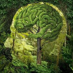 brain_maze_tree