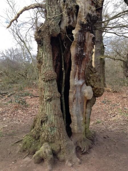 Sherwood Forest - Spring 2015 (5)