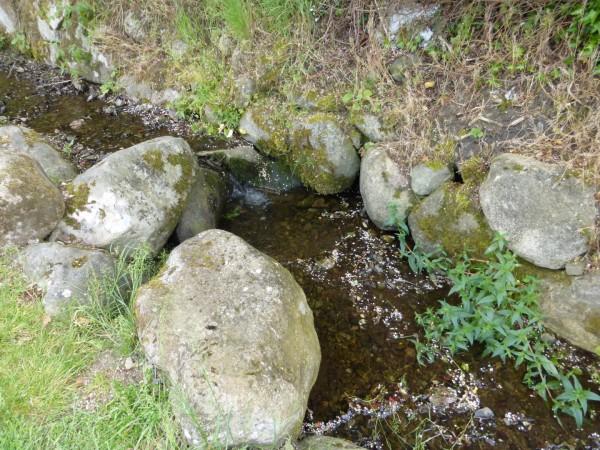 Foughart and Brigid - June 15 (6)