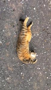 a cat that isn't