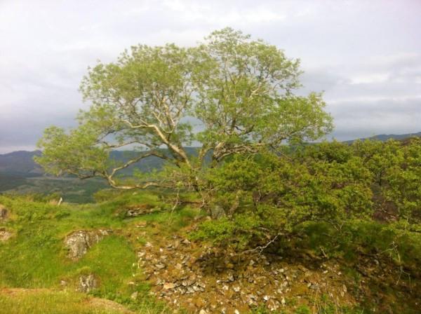 Overlooking the Edge