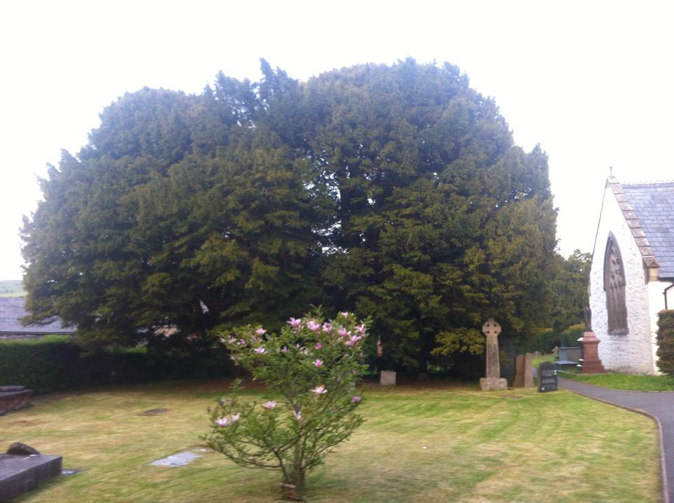The Question and an Ancient Yew