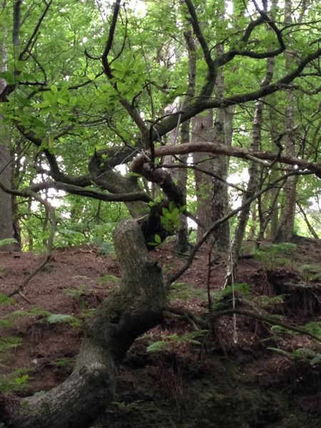 Alderley Edge - July 15 (5)