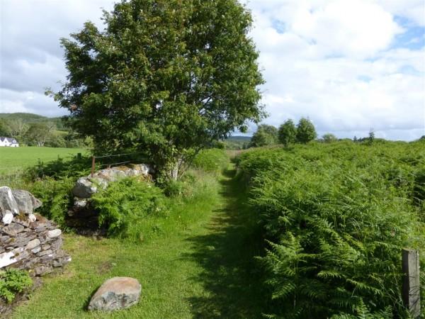 Balauchraig stone row and circle - Lammas 2015 (19)
