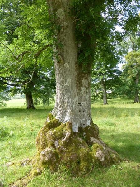 Dunchraigaig Cairn - Lammas 2015 (14)