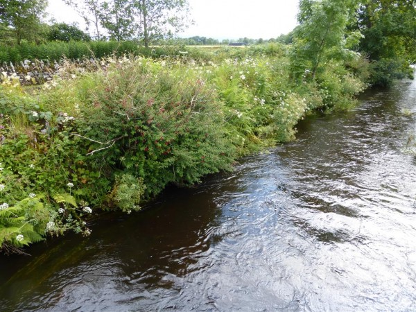 Nether Largie river and stones - Lammas 2015 (2)