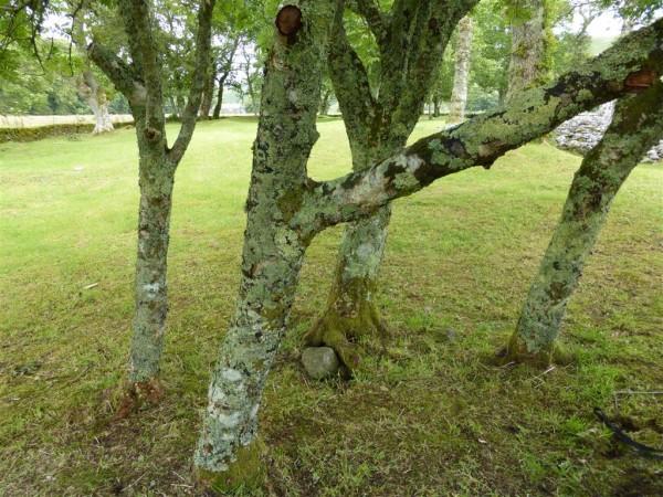 Temple Wood South stone circle - Lammas 2015 (4)