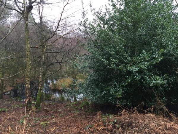 Jan 16 - Delamere Forest (1)