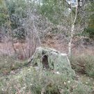 Surrey 2 – The Deerhunter